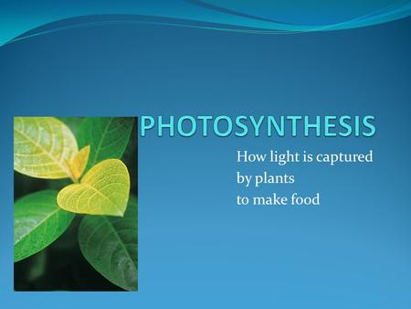 How light is captured by plants to make food. PHOTOSYNTHESIS Photosynthesis is a process by which light energy is converted into chemical energy of sugars.