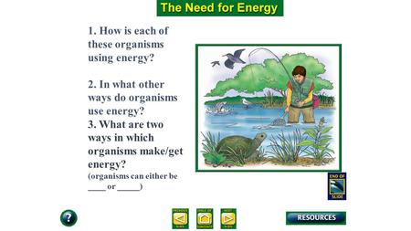9.1 Section Objectives – page 221 1. How is each of these organisms using energy? 2. In what other ways do organisms use energy? 3. What are two ways in.