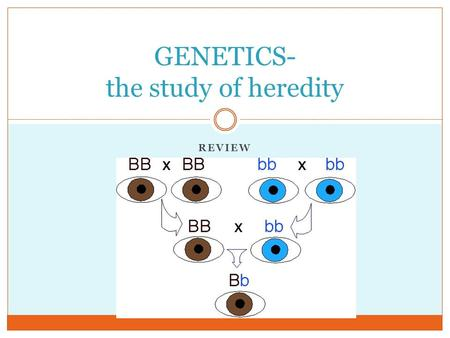 REVIEW GENETICS- the study of heredity. Inheritance Traits are specific characteristics inherited from parents Genes are the factors that determine traits.