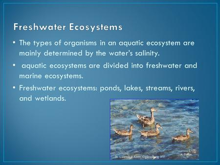 The types of organisms in an aquatic ecosystem are mainly determined by the water's salinity. aquatic ecosystems are divided into freshwater and marine.