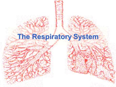 The Respiratory System. Function of the respiratory system To provide a constant supply of oxygen to keep your body cells functioning To remove carbon.