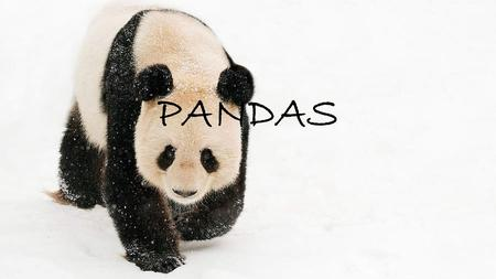 PANDAS. The animals I describe are pandas. They are very interesting animals. They live alone in bamboo forest in China.