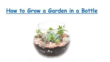 How to Grow a Garden in a Bottle. A bottle can be recycled to function as a miniature greenhouse.