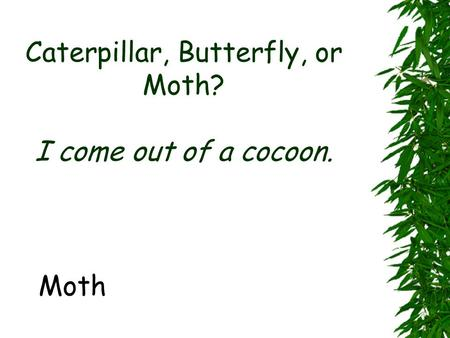 Caterpillar, Butterfly, or Moth? I come out of a cocoon. Moth.