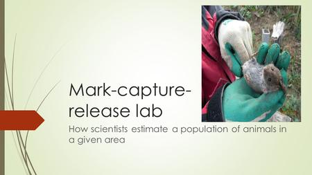 Mark-capture- release lab How scientists estimate a population of animals in a given area.