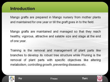 Mango grafts are prepared in Mango nursery from mother plants and maintained for one year or till the graft goes in to the field. Mango grafts are maintained.