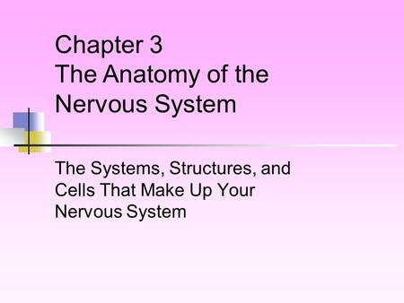 The Systems, Structures, and Cells That Make Up Your Nervous System
