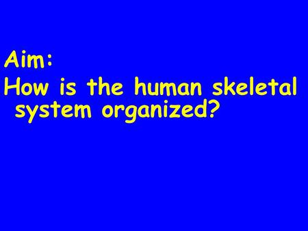Aim: How is the human skeletal system organized?