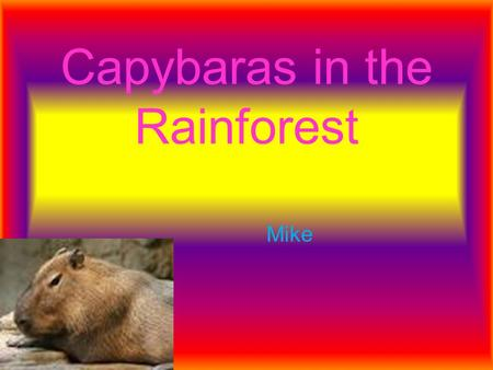 Capybaras in the Rainforest Mike. Introduction The Rainforest is very important to us. Rainforest s are located near the equator. They need water, heat.