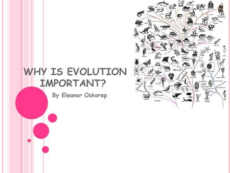 WHY IS EVOLUTION IMPORTANT? By Eleanor Oskorep. How Science Works After observations from nature are made, scientists develop questions about the world.
