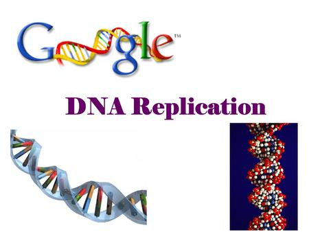 "2007-2008 DNA Replication Double helix structure of DNA ""It has not escaped our notice that the specific pairing we have postulated immediately suggests."