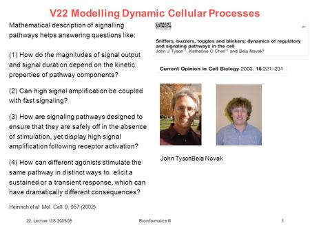 22. Lecture WS 2005/06Bioinformatics III1 V22 Modelling Dynamic Cellular Processes John TysonBela Novak Mathematical description of signalling pathways.