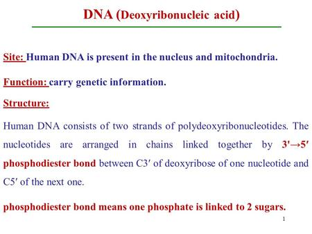 DNA ( Deoxyribonucleic acid ) Site: Human DNA is present in the nucleus and mitochondria. Function: carry genetic information. Structure: Human DNA consists.