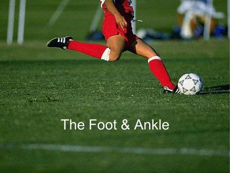 The Foot & Ankle. 1/4/20162 Bony Anatomy of the Foot.