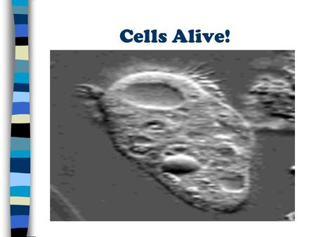 Cells Alive!. Cell History 1. The invention of microscope led to the study of cells 2. Notable Scientists a. Robert Hooke: 1 st to describe the cell b.