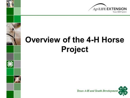 Overview of the 4-H Horse Project Texas 4-H and Youth Development.