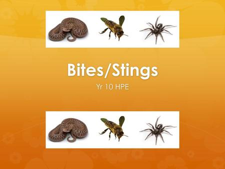 Bites/Stings Yr 10 HPE. Lesson Overview  Venomous bites and stings  Snakebites  Spider bites  Insect stings  Allergic reaction to a sting  Animal.