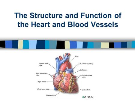 The Structure and Function of the Heart and Blood Vessels.