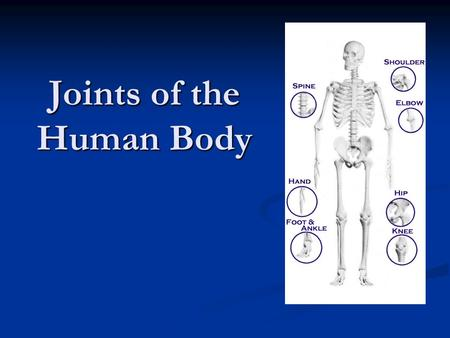 Joints of the Human Body. Joints Joints are the points of contact (or articulations) between two connected bones. Joints are the points of contact (or.