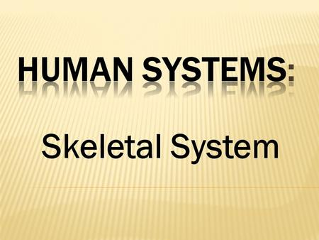 Skeletal System.  Bones and cartilage  Alive and active  206 bones in humans  Support and protection  Helps maintaining homeostasis  Store minerals,