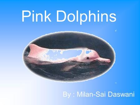 Pink Dolphins By : Milan-Sai Daswani. Where in Hong Kong do Pink Dolphins live? Dolphins in Hong Kong usually live everywhere. But there is one main place.