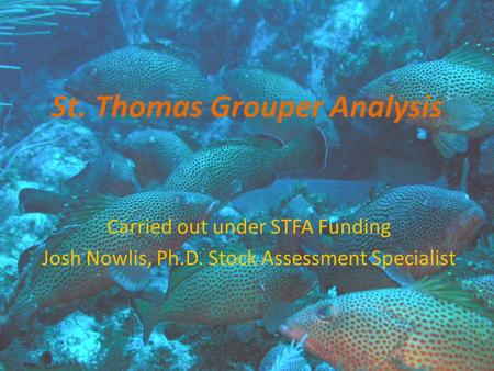 St. Thomas Grouper Analysis Carried out under STFA Funding Josh Nowlis, Ph.D. Stock Assessment Specialist.