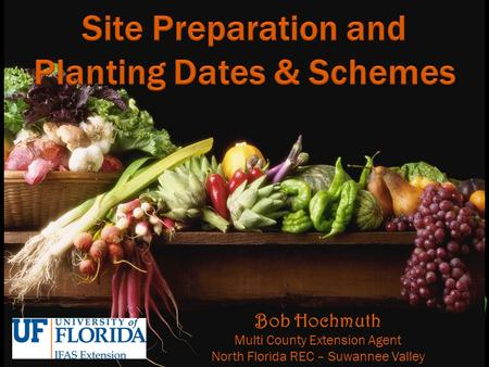 Bob Hochmuth Multi County Extension Agent North Florida REC – Suwannee Valley.