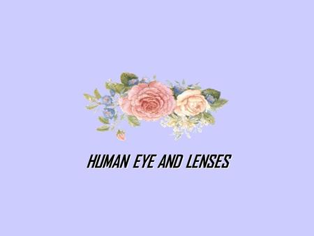 HUMAN EYE AND LENSES. INTRODUCTION Eye is the light-sensitive organ of vision in animals. The actual process of seeing is performed by the brain rather.