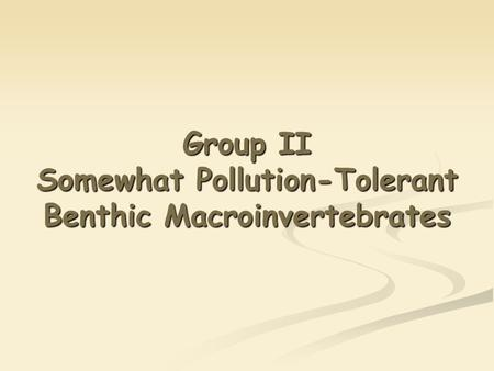Group II Somewhat Pollution-Tolerant Benthic Macroinvertebrates.