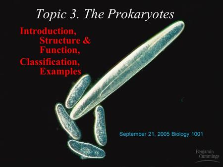 Topic 3. The Prokaryotes Introduction, Structure & Function, Classification, Examples September 21, 2005 Biology 1001.