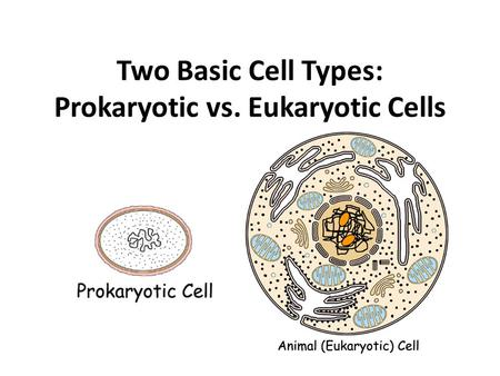 Two Basic Cell Types: Prokaryotic vs. Eukaryotic Cells.