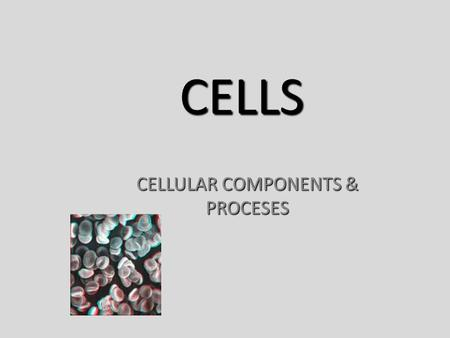 CELLS CELLULAR COMPONENTS & PROCESES. CELL THEORY 1.All living things are composed of cells. 2.The cell is the basic unit of structure and function in.