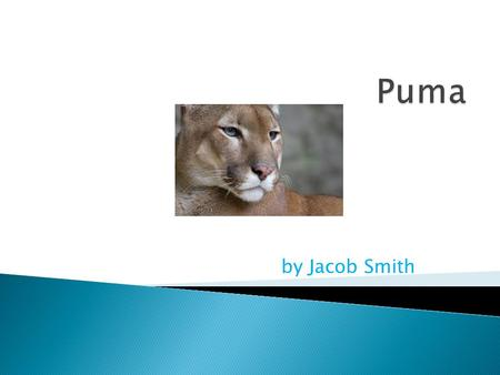 By Jacob Smith.  The Puma is in the mammal group  The scientific name is Felix Concolor  The lifespan of the Puma is about 20 years.