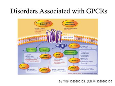 Disorders Associated with GPCRs By 刘芬 1080800103 麦星宇 1080800105.