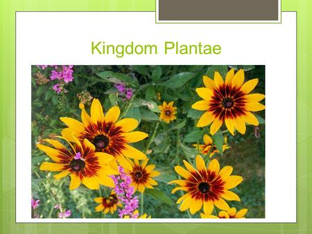 Plantae Examples With Scientific Names