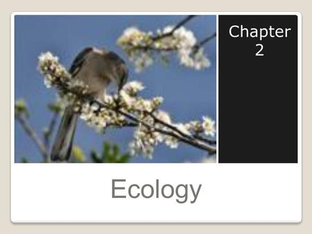 Ecology Chapter 2. What is Ecology? Ecology is the study of interactions that take place between organisms and their environment. Ex. Bird on a tree limb.