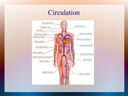 Circulation. The circulatory system acts as a transportation network for our cells and tissues It supplies nutrients and removes wastes It is 96000 km.