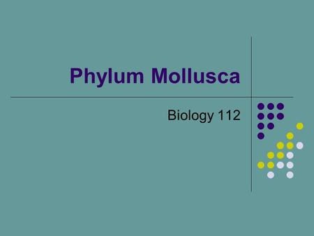 Phylum Mollusca Biology 112. Mollusks Snails, slugs, clams, octopus??? Do diverse, yet the same phylum??? Most mollusks have soft bodies and some type.