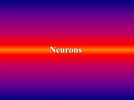 "Neurons.  Definition: An individual nerve cell  100 billion neurons make up the brain  Neurons link to each other in tight clusters and long ""chains"""