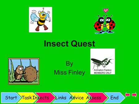 StartTaskInsectsLinksAdviceAssessEnd Insect Quest By Miss Finley.