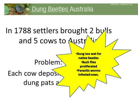 In 1788 settlers brought 2 bulls and 5 cows to Australia Problem: Each cow deposited 10-20 dung pats a day.