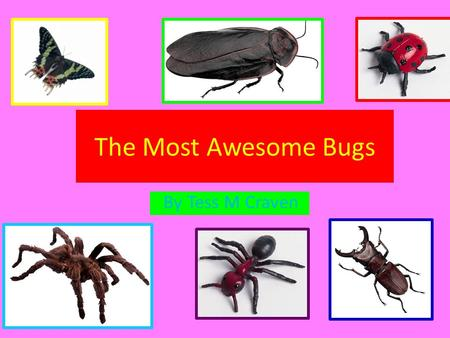 The Most Awesome Bugs By Tess M Craven. Description: It has a black body with yellow stripes on top and is 2 cm to 2.3 cm Food: Tadpoles and small fish.