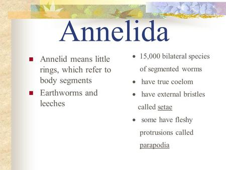 Annelida Annelid means little rings, which refer to body segments Earthworms and leeches  15,000 bilateral species of segmented worms  have true.