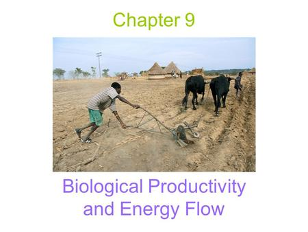 Chapter 9 Biological Productivity and Energy Flow.