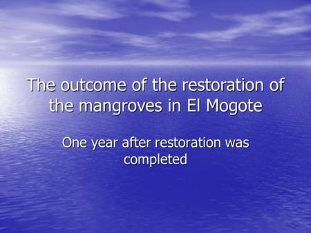 The outcome of the restoration of the mangroves in El Mogote One year after restoration was completed.