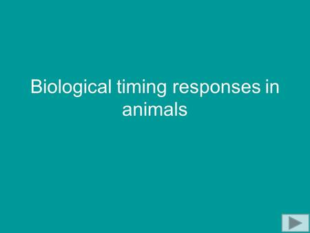 Biological timing responses in animals. Biological Clocks Used by animals for: Controlling daily rhythms, e.g. sleep Synchronising breeding times Predicting.