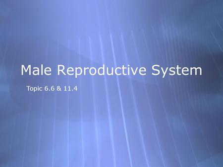 Topic 6.6 & 11.4 Male Reproductive System. Further functions  Urethra: tube from ejaculatory duct through penis that carries semen and urine (but.