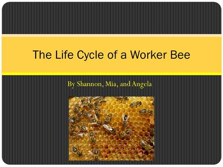 By Shannon, Mia, and Angela The Life Cycle of a Worker Bee.