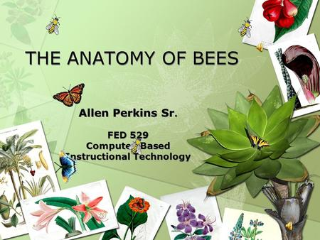 THE ANATOMY OF BEES Allen Perkins Sr. FED 529 Computer-Based Instructional Technology Allen Perkins Sr. FED 529 Computer-Based Instructional Technology.