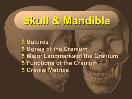 Slide 1 Skull & Mandible  Sutures  Bones of the Cranium  Major Landmarks of the Cranium  Functions of the Cranium  Cranial Metrics  Sutures  Bones.